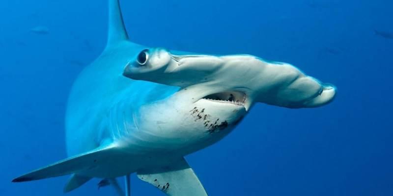ההשראה לעיצוב החזית: כריש פטיש